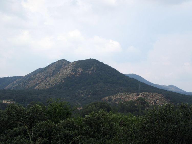Grüne Hügel und Bäume in der Region Parys, Südafrika