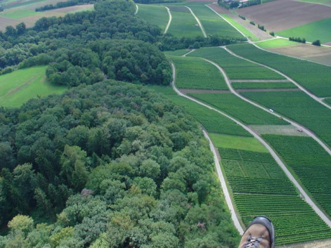 Die grüne Wiesenfläche zwischen den Weinreben ist der Startplatz