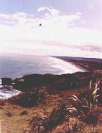 Paragliding Fluggebiet Australien / Ozeanien » Neuseeland,Muriwai - Gannet Rock,//nzhgpa.org.nz/akl.htm