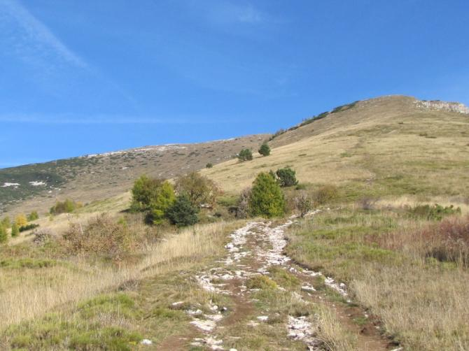 Blick von der Waldgrenze zum Gipfel. Es gibt unzählige einfache Startmöglichkeiten