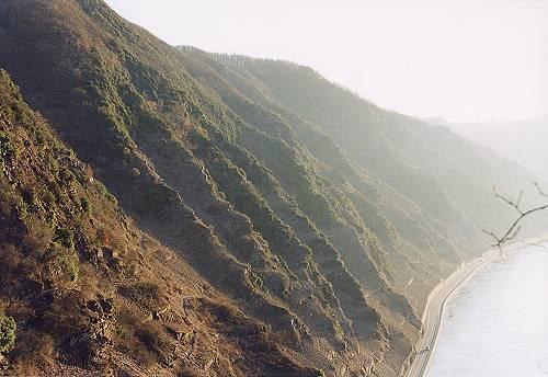 Das Bild zeigt die steile Flanke des Startgeländes in Bremm an der Mosel aus der perspektive des Steigs auf halber Höhe. Videomaterial unter www.freiflieger.eu