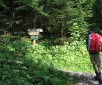 Paragliding Fluggebiet Europa » Deutschland » Bayern,Jägerbauernalm Nagelspitz Jägerkamp,Von der Forststraße auf den Bergsteig